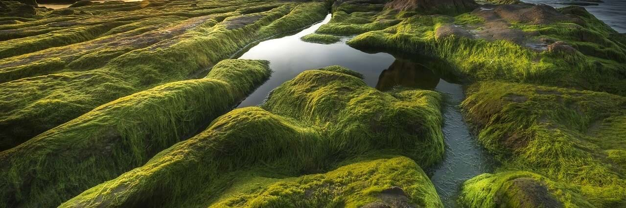 green algae growing on rocks https://greener4life.com